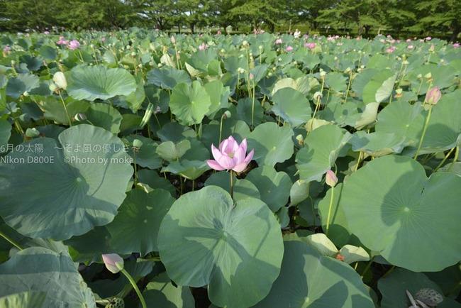 20120729_gyouda02.jpg