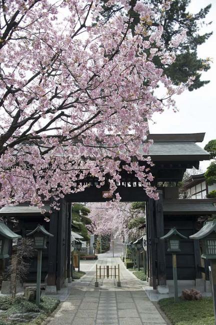 20150328_mitsuzouin29.jpg