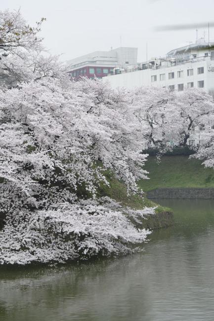 20150401_chidorigafuchi19.jpg