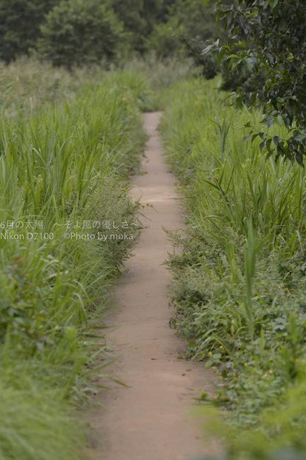 20150916_mizumoto-park15.jpg