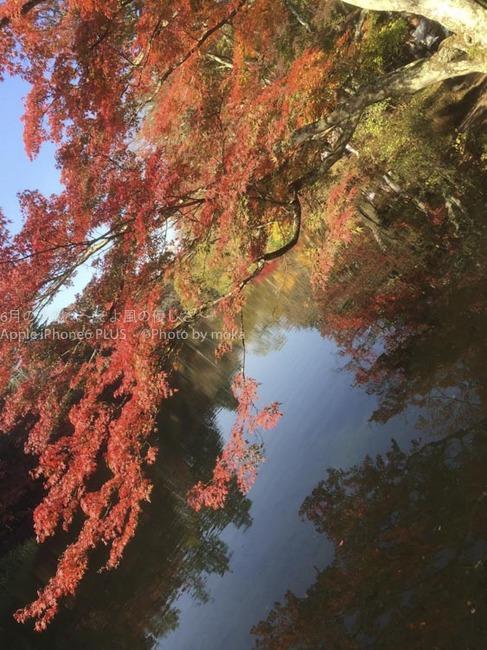 20151024_karuizawa39.jpg